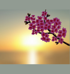 sakura in the background of a beautiful sunset a vector image