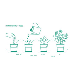 growing phases of potted plant - seeding vector image vector image