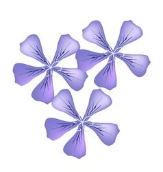 Purple geranium flowers or pelargonium graveolens vector