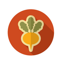 Turnip flat icon vegetable root vector