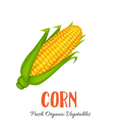corn vegetable vector image
