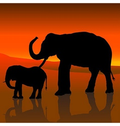 Elephants and red sky vector