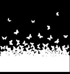 butterflies vector image