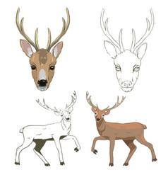 Deer sketch set vector
