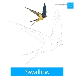 Swallow bird learn to draw vector