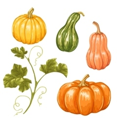 Set of pumpkins collection decorative vegetables vector