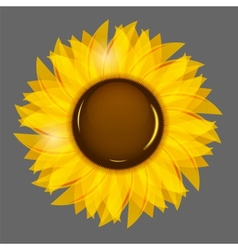 Sunflowers background vector