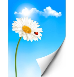 Nature summer background with daisy flower with vector