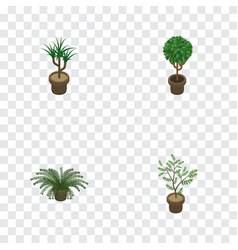 Isometric flower set of houseplant tree fern and vector