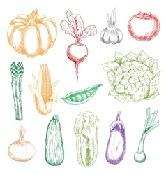 Wholesome fresh harvested vegetables sketches vector