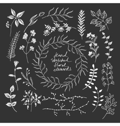 Hand sketched floral elements vector