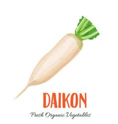 daikon vegetable vector image vector image