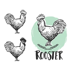 Rooster logotypes set Vintage produce elements vector image