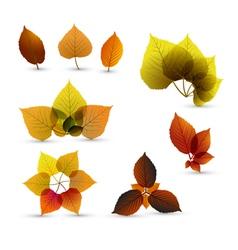 autumn leaves set vector image