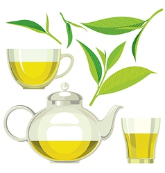 Green tea leaves tea cup glass vector