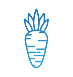 vegetable carrot harvest nutrition food vector image