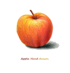 Red apple hand drawn eps8 vector