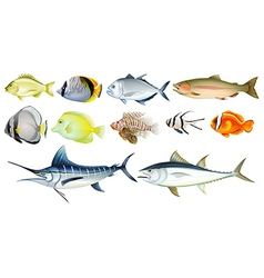 Different fishes vector