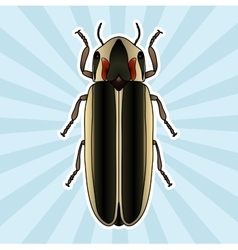 Insect anatomy sticker firefly beetle lampyridae vector