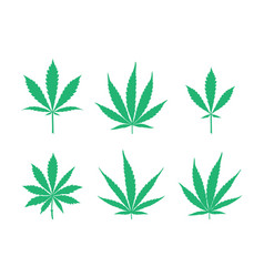 cannabis leaves set vector image vector image