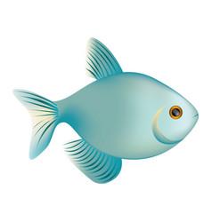 colorful realistic fish aquatic animal icon vector image