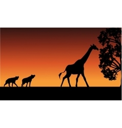 Silhouette of panther and giraffe vector