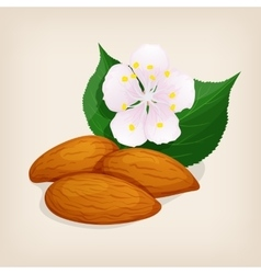 Apricot kernel with leaves and a flower vector