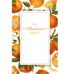 mandarin vertical banner vector image vector image