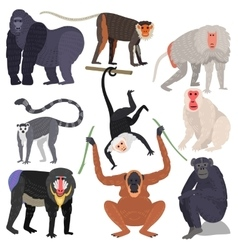 Different types of monkeys rare animal set vector