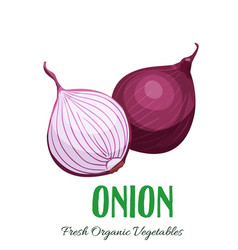 onion vegetable vector image