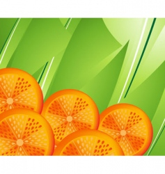 Orange slices vector