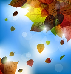 Autumn leafs background- fall with back ligh vector image
