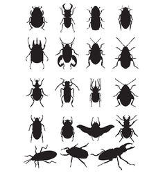 bugs silhouette vector image vector image