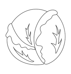 Cabbage icon outline Singe vegetables icon from vector image