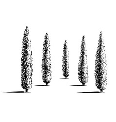 Set of cypresses vector