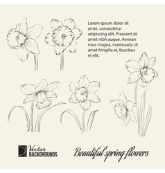 Spring flower set vector image
