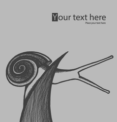 Hand draw snail on blade of grass vector