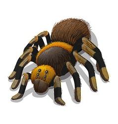 A tarantula spider vector
