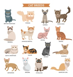 Cat breed set vector