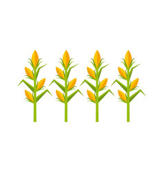 Corn cultive isolated icon vector