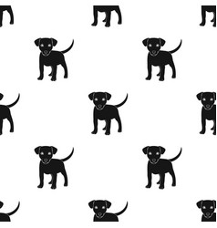 Puppy labradoranimals single icon in black style vector