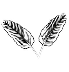 Two tropical palm leaves exotic natural vector