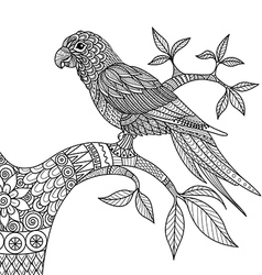 Doodle design of parrot on branch for adult colori vector image vector image