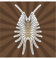 Insect anatomy sticker scutigera coleoptrata vector