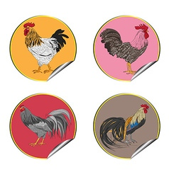 roosters stickers vector image vector image