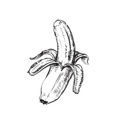 banana isolated hand drawn vector image