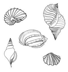 seashell sea star set summer holiday marine vector image