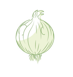 Silhouette fresh onion natural vegetable nutrition vector