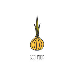 Onion hand drawn on white background vector