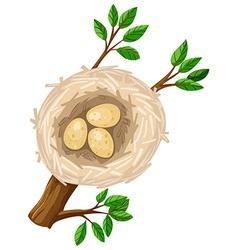 Three eggs in bird nest vector image